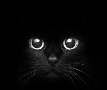 tTLfclW_JsZi1V_Dark_soul_cat