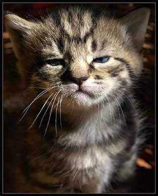 Gato_enfadado